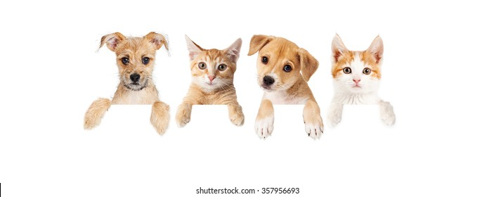 Row of cute puppies and kittens with paws hanging over a blank sign. Image sized to fit a popular social media timeline photo placeholder.