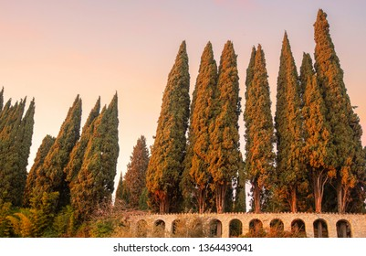 Row of cypress trees in a park with an arched perimeter wall at sunset, Sirmione, Lake Garda, Lombardy, Italy