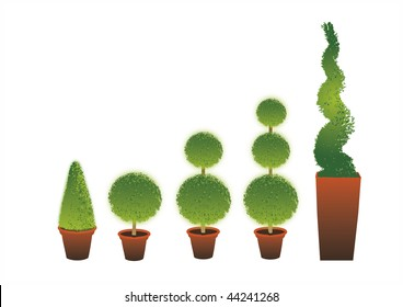 A row of different shape Topiary shrubs set in terracotta pots set on an isolated white background.