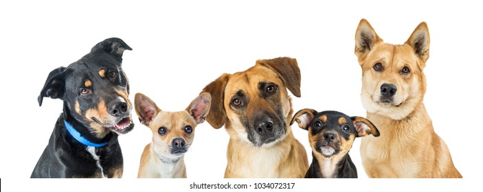 Row of different types of small medium and large mixed breed dogs over white on a horizontal web banner