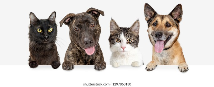 Row of dogs and cats hanging paws over blank white web banner or social media header