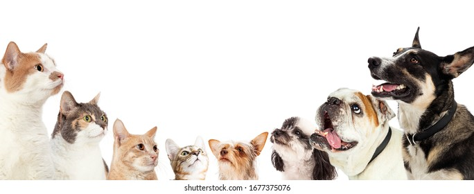 Row of domestic cats and dogs along edge of a horizontal white web banner looking up into blank white room for text