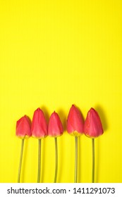 Row of five Red Tulips Isolated on yellow Color Background