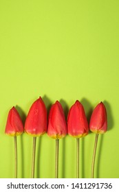 Row of five Red Tulips Isolated on green Color Background