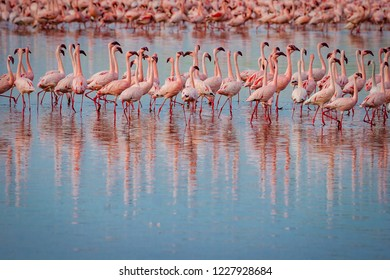 Row of flamingoes in the wilds of Africa, reflecting in calm wat