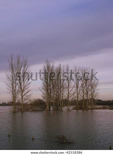 a row of flooded poplar trees at dusk on a winters evening