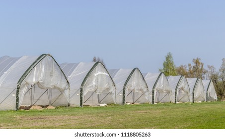 row with foil tents in which asparagus is grown