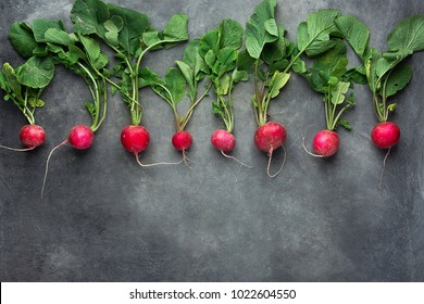 Row of Fresh Raw Organic Red Radishes with Greenn Leaves Arranged in Upper Border on Dark Concrete Stone Background. Copy Space for Text. Website Banner Poster Template. Vegetarian Supefoods