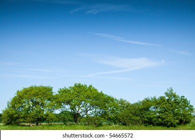A row of green trees and bushes against a blue sky