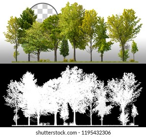 Row of green trees and pines isolated on transparent background via an alpha channel of great precision. Very high quality mask without unwanted edge. High resolution for professional composition.