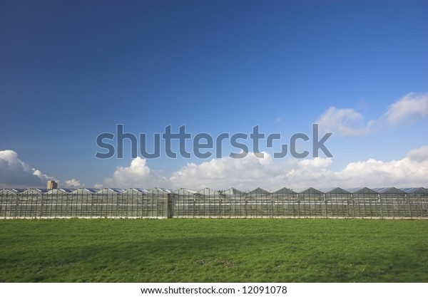 Row of greenhouses under a blue sky in Holland