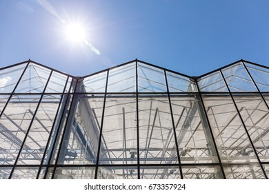 row of greenhouses under clear blue sky. front view.