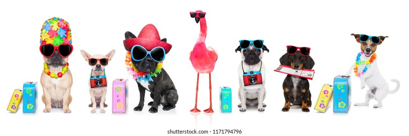 row or group of dogs ready  to go on summer vacation holidays, with hat, camera , ticket, bag and luggage