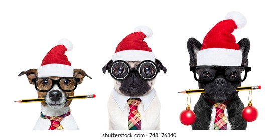 row or group of dogs in working team with nerd glasses as an office business worker, isolated on white background, on christmas holidays vacation with red santa claus hats