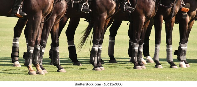 Polo Horse Images Stock Photos Amp Vectors Shutterstock