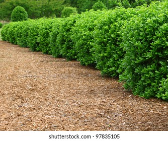A row of landscaped and well maintained, mulched and manicured bushes using a shallow depth of field and selective focus on the bushes closet to the front with room for your text.