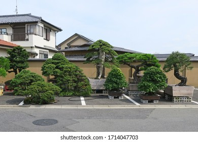 A row of large bonsai trees at the side of the road in a place nicknamed the bonsai tree village. Saitama City, Japan - 22nd July 2017
