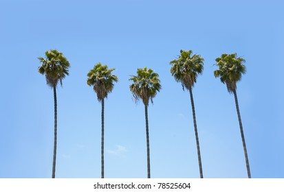 Row of many palm trees against a blue sky