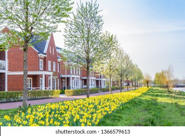 Row of modern houses in a family friendly suburban neighborhood with blooming  daffodils in Veenendaal in the Netherlands.