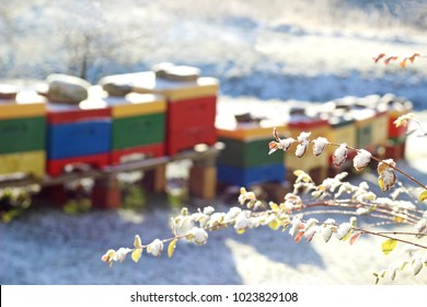row of multi colored bee hives in snow, focus on branches in foreground