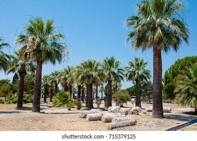 row of palm trees and ancient ruins under blue sky in Hierapolis, Turkey on sunny day