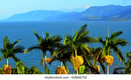 Row of palm trees on the coast of Port Douglas in the tropical north of  Queensland,  Australia