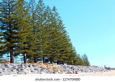 A row of pine trees at Busselton's sandy  white beach on a cloudy spring morning  offer shade to picnickers in this iconic coastal city in south  Western Australia.