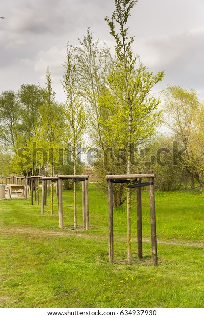 Row of planted trees on grees grass at a park