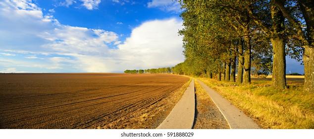 Row of Poplar Trees along Farm Road besides Plowed Field in the Warm Light of the Setting Sun