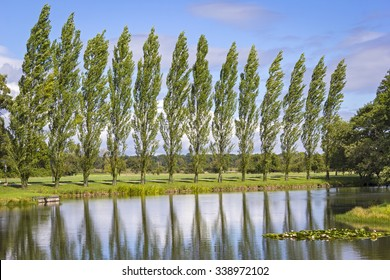 Row of Poplar Trees, with a lake in foreground.