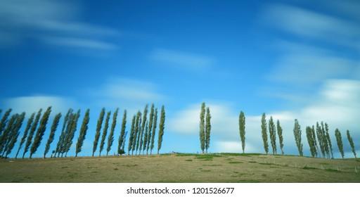 Row of poplars on the horizon against cloudy sky