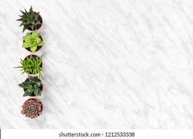 Row of potted succulent plants on marble background, with copy space.