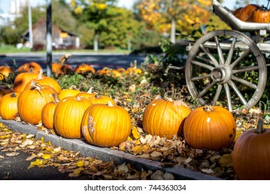 Row of pumpkins along the road. Cart on background