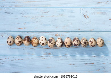 A row of quail eggs on a blue wooden surface - top view