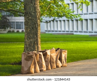 Row of recycling yard waste paper bags