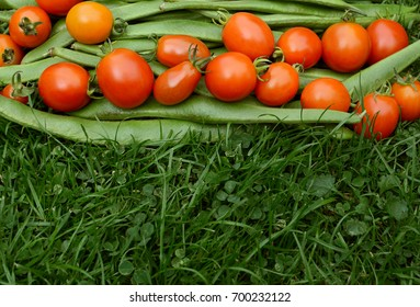 Row of red tomatoes on runner beans on lush green grass with copy space