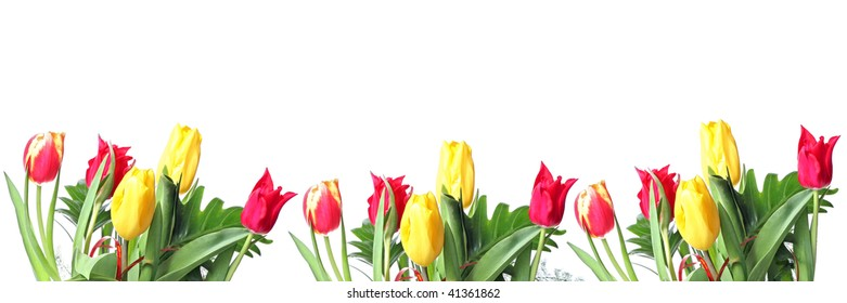 Row of red and yellow tulips for border or frame