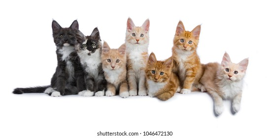 Smoking Cat Images, Stock Photos & Vectors | Shutterstock