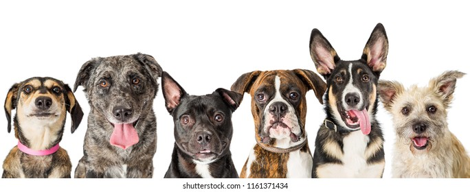 Row of six cute and friendly mixed breed dogs over white horizontal web banner or social media cover image