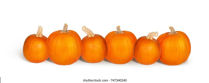 Row of six fresh pumpkins isolated on white with copy space on a horizontal banner