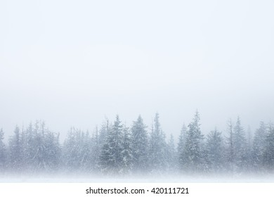 Row of snow-covered trees with winter sky above and mystical fog below