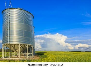 A row of steel grain bins near a canola field.