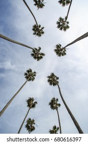 Row of tall palm trees in Los Angeles