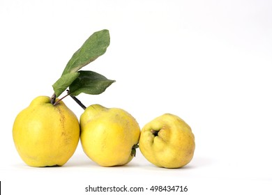Row of three quinces, an old and traditional kind of fruit, similar to [pears