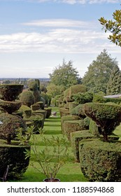 A row of topiary trees in a topiary tree garden in a stately home in Kent