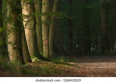 Row of tree trunks on forest path in sunlight on summer morning.