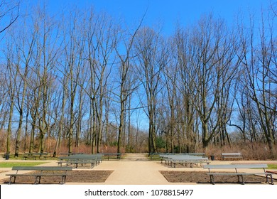 Row of tree without leaves in fall season against clear blue sky. Public park with chairs for people to visit and relax at sunny day.