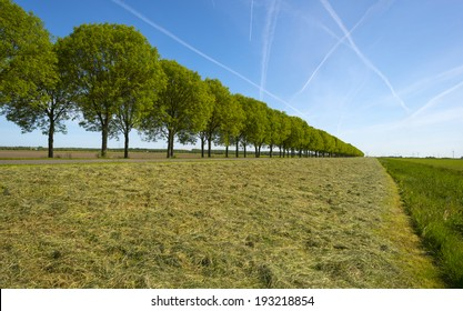 Row of trees along a field in spring