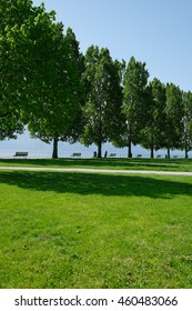 A row of trees along the promenade of lake Geneva in Switzerland.