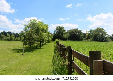 The row of trees along side of the wooden fence in the grass field.